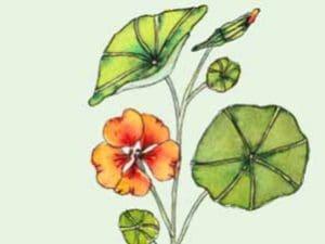 blomsterfrø fra økohaven